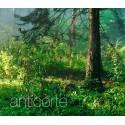Anticorte